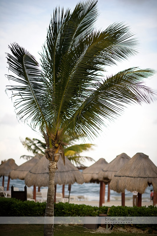 palm trees in mexico