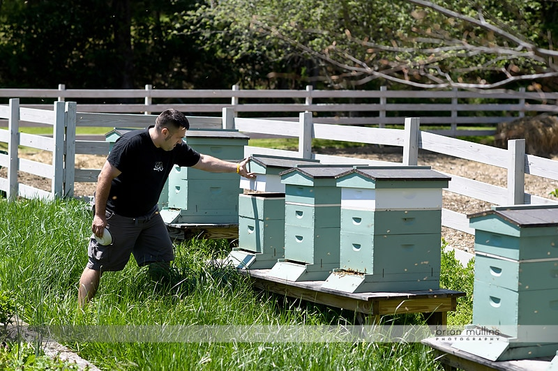 mast farm inn beehives