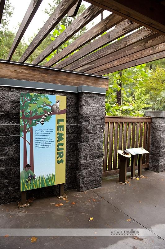lemur exhibit at durham museum of life and science