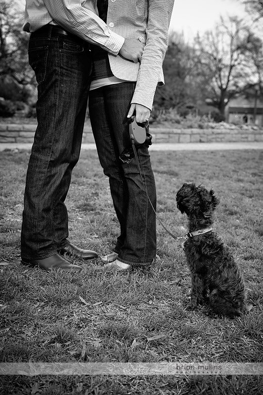 wedding photos with dogs